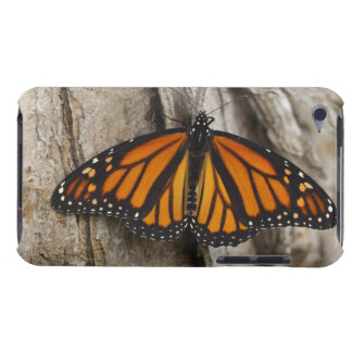 Monarch Butterfly iPod Touch Case