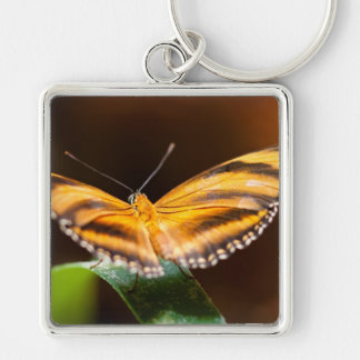 Monarch Butterfly Silver-Colored Square Key Ring