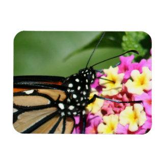 Monarch Butterfly, Lantana Flowers.Magnet Rectangular Photo Magnet