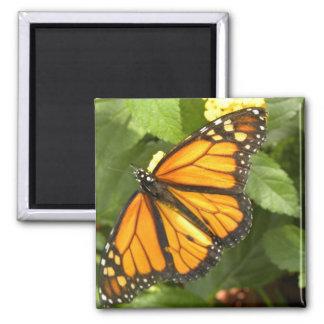 Monarch Butterfly - Magnet