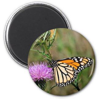 Monarch Butterfly Fridge Magnets