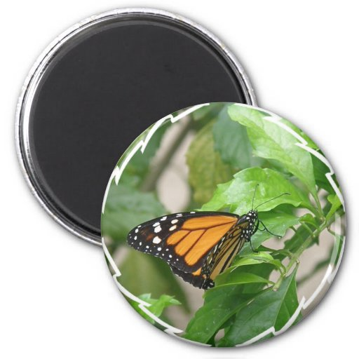 Monarch Butterfly Magnet Magnets