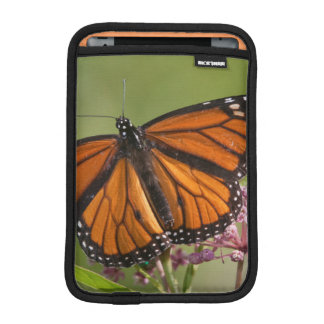 Monarch Butterfly male on Swamp Milkweed iPad Mini Sleeve