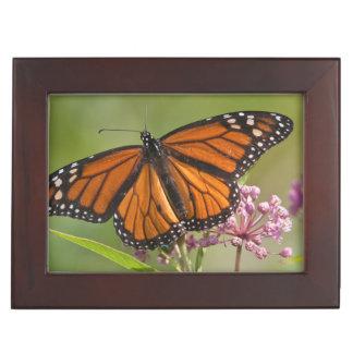 Monarch Butterfly male on Swamp Milkweed Keepsake Box