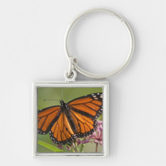 Monarch Butterfly male on Swamp Milkweed Key Ring