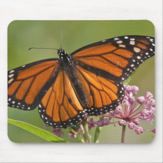 Monarch Butterfly male on Swamp Milkweed Mouse Mat