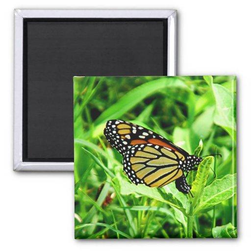 Monarch Butterfly Manget Refrigerator Magnet