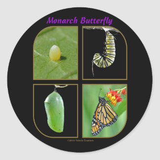 Monarch Butterfly Metamorphosis Sticker