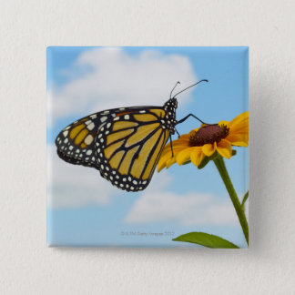 Monarch Butterfly on a Black Eyed Susan 15 Cm Square Badge