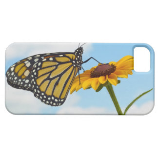 Monarch Butterfly on a Black Eyed Susan Barely There iPhone 5 Case