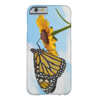Monarch Butterfly on a Black Eyed Susan Barely There iPhone 6 Case