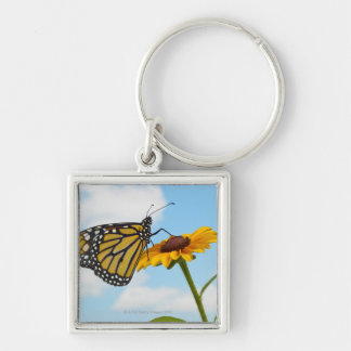 Monarch Butterfly on a Black Eyed Susan Keychains