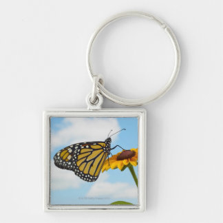 Monarch Butterfly on a Black Eyed Susan Silver-Colored Square Key Ring