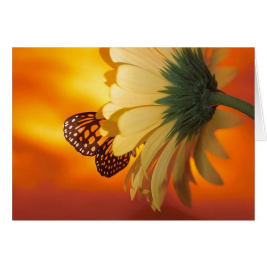 Monarch Butterfly on a Daisy Blank Card