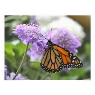 Monarch Butterfly on a Purple Flower Photo Art