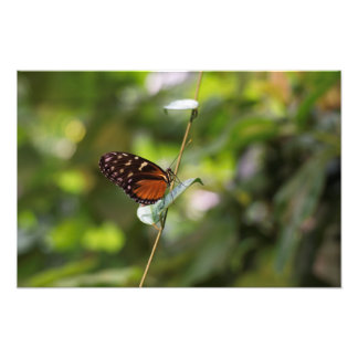 Monarch Butterfly On a Twig Photo Print