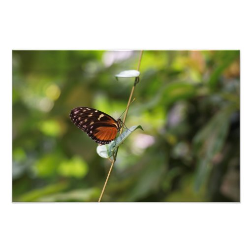 Monarch Butterfly On a Twig Photo
