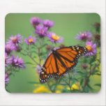 Monarch Butterfly on Asters Mousepads