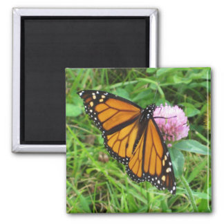 Monarch Butterfly on Clover Square Magnet