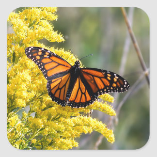 Monarch Butterfly on Goldenrod Sticker