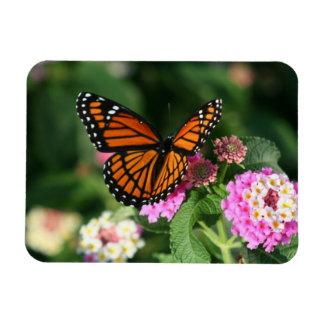 Monarch Butterfly on Lantana Flowers.Magnet Magnet