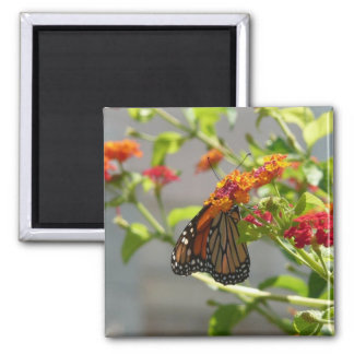 Monarch Butterfly on Red Butterfly Bush Square Magnet