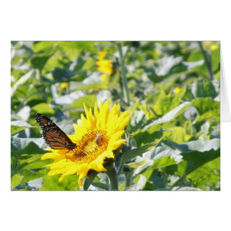 Monarch butterfly on sunflower note card