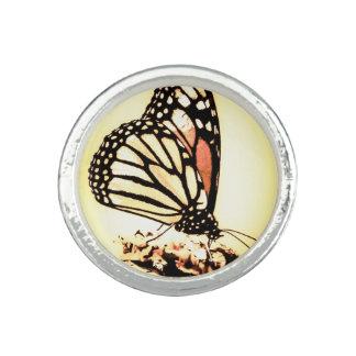 Monarch Butterfly, Orange