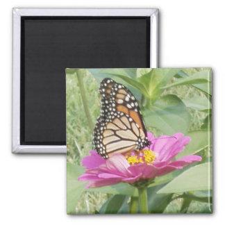 Monarch Butterfly, Pink Zinnia Magnet