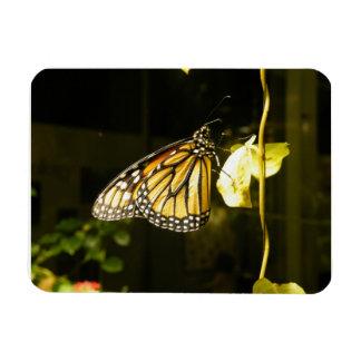 Monarch Butterfly Vinyl Magnet