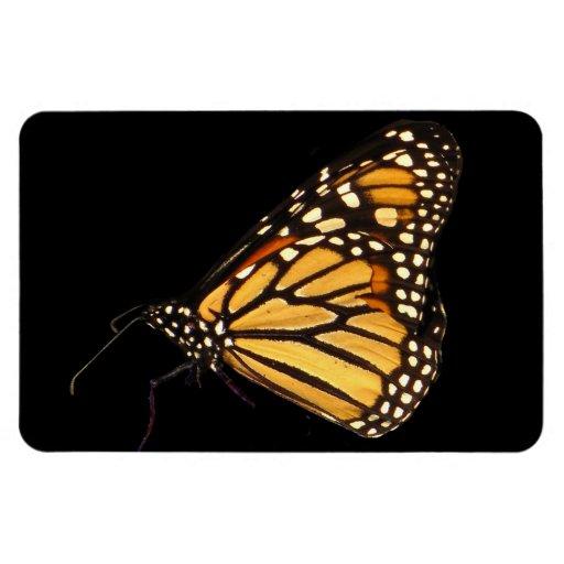 Monarch Butterfly Rectangular Magnets