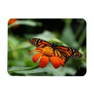 Monarch Butterfly Premium Magnet