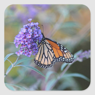 Monarch butterfly profile square sticker
