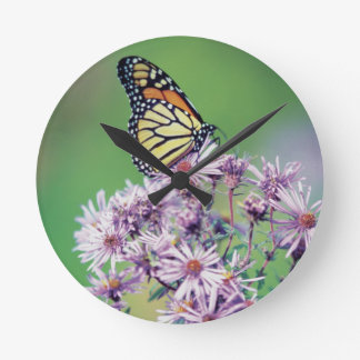 Monarch Butterfly Round Clock