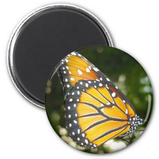 Monarch Butterfly Round Magnet Magnet