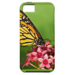 Monarch Butterfly  Side View Vibrant Photograph iPhone 5 Cases