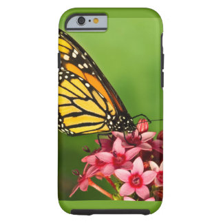 Monarch Butterfly  Side View Vibrant Photograph Tough iPhone 6 Case