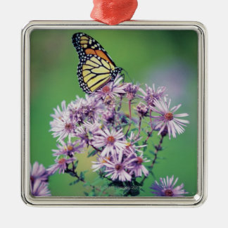 Monarch Butterfly Silver-Colored Square Decoration