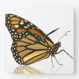 Monarch butterfly square wall clock