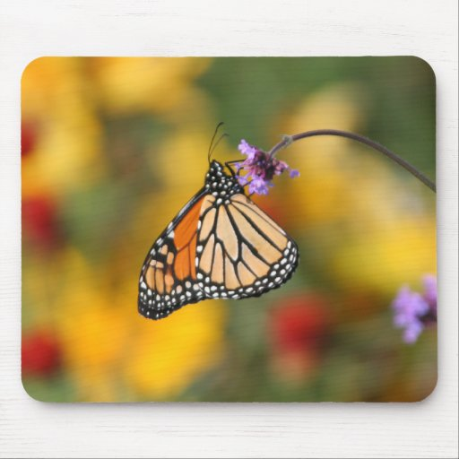 Monarch Butterfly Stops for Pollen Mousepad