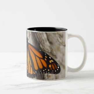 Monarch Butterfly Two-Tone Coffee Mug