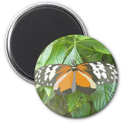 monarch butterfly vector art animation cartoon refrigerator magnets