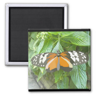 monarch butterfly vector art animation cartoon square magnet