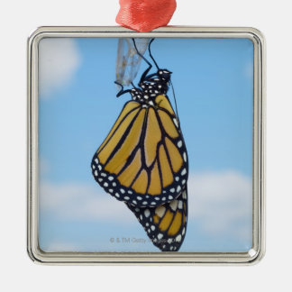 Monarch Butterfly, with Chrysalis Silver-Colored Square Decoration