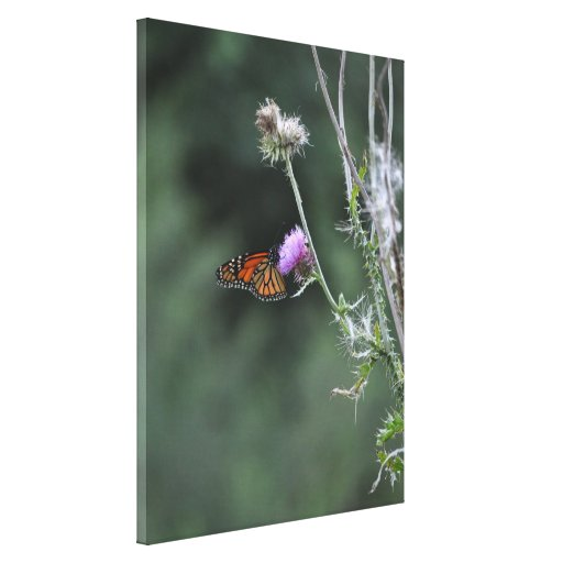 Monarch Butterfly Wrapped Canvas Canvas Prints