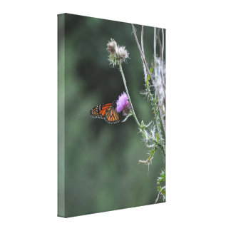 Monarch Butterfly Wrapped Canvas Stretched Canvas Prints
