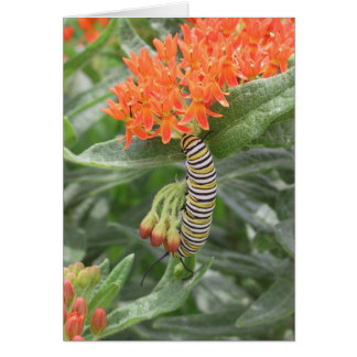 Monarch Catterpillar on Butterfly Weed Card