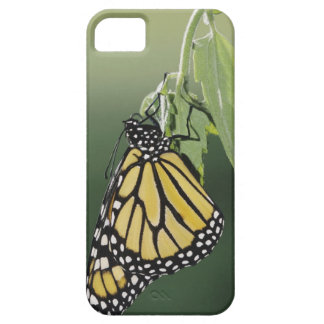 Monarch, Danaus plexippus, adult newly emerged Barely There iPhone 5 Case