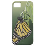 Monarch, Danaus plexippus, adult newly emerged iPhone 5 Covers