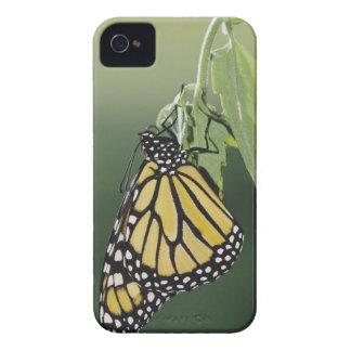 Monarch, Danaus plexippus, adult newly emerged Case-Mate iPhone 4 Case